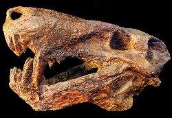 Палеонтологическая выставка